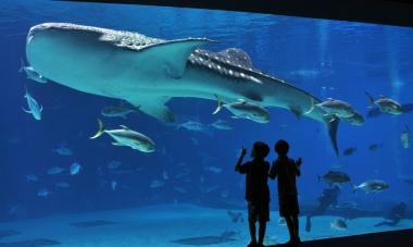 İstanbul Aquarium Tour